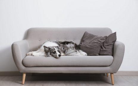 Pięknie wyglądająca kanapa po renowacji z zastosowaniem ciekawego materiału obiciowego