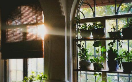 Rośliny doniczkowe przy oknie w domu