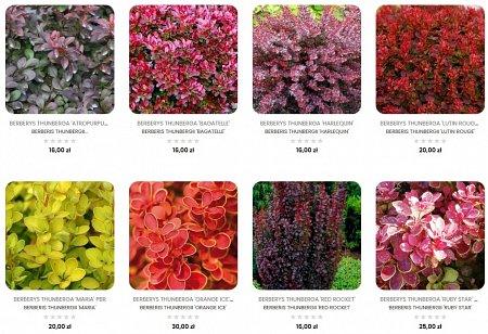 sadzonki kwiatów