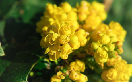 żółty kwiat