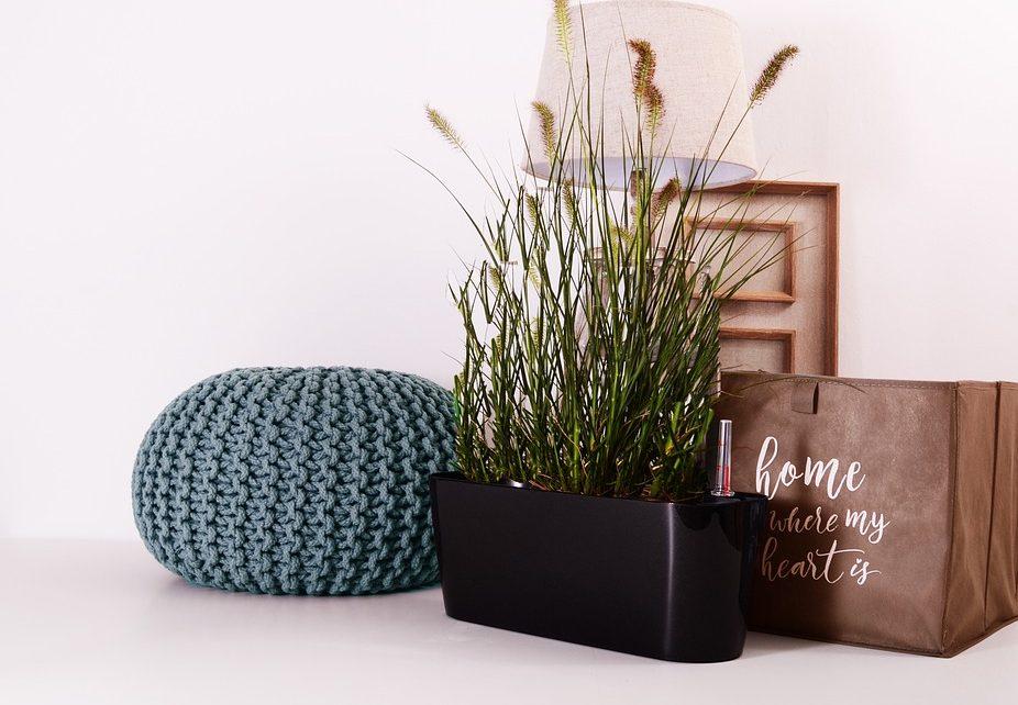Roślina w plastikowej doniczce