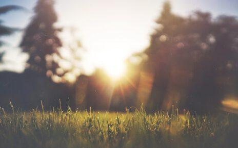 trawa i zachód słońca