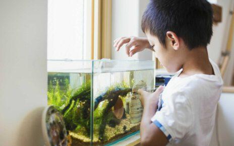 Posiadając domowe akwarium warto zapoznać się z zasadami żywienia ryb